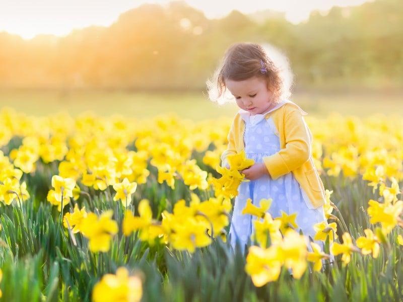 little girl in a field of daffodils