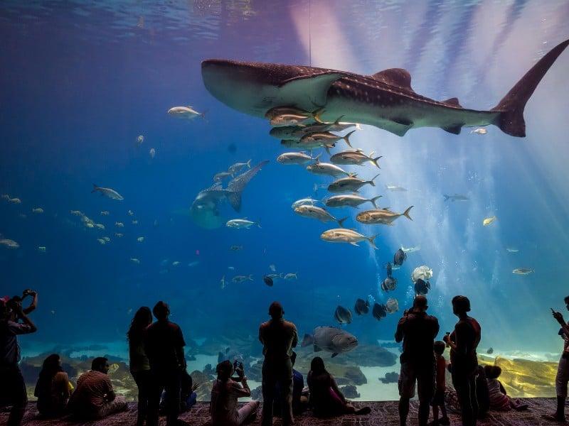 Interior of Georgia Aquarium with its large viewing anks