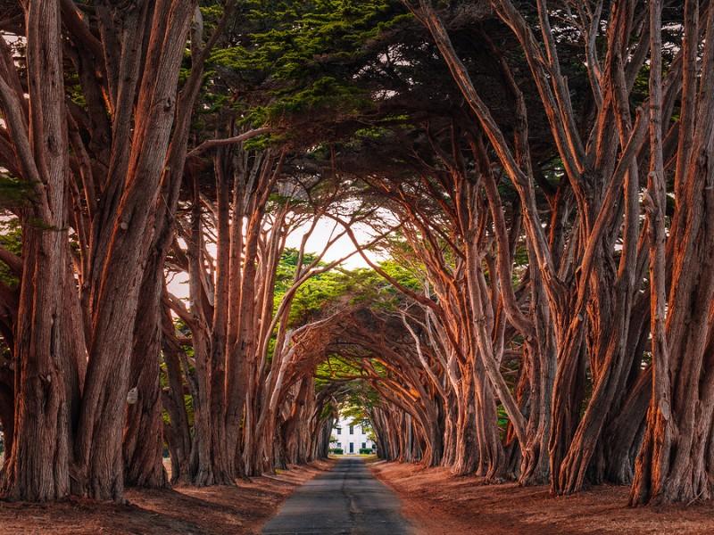 Stunning Cypress Tree Tunnel at Point Reyes National Seashore