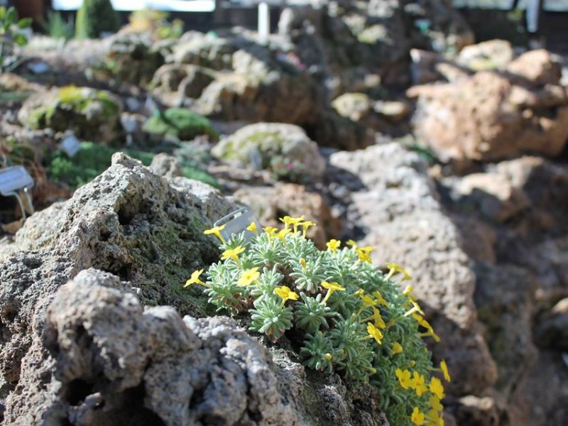 The Betty Ford Alpine Gardens are the highest botanical garden in the United States.