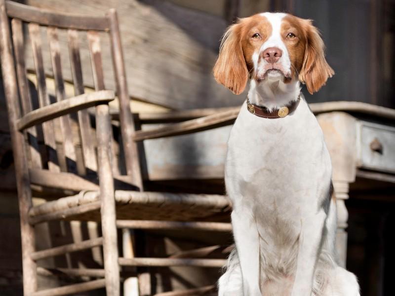 Friendly pup at Barnsley Resort