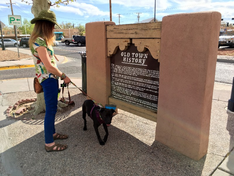 Dog exploring on Old Town ABQ