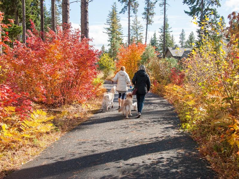 Fall dog walk at Suncadia Resort