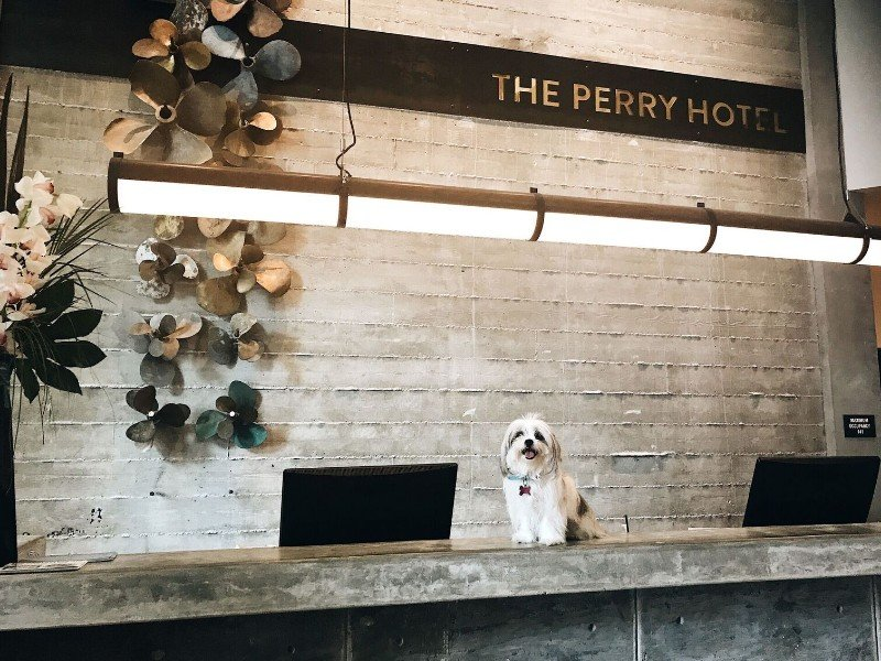 Dog welcome at the Perry Hotel Key West at Stock Island Marina