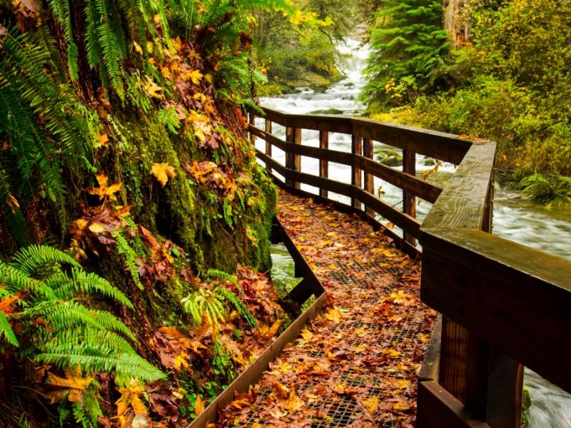 Sweet Creek Trail in Oregon