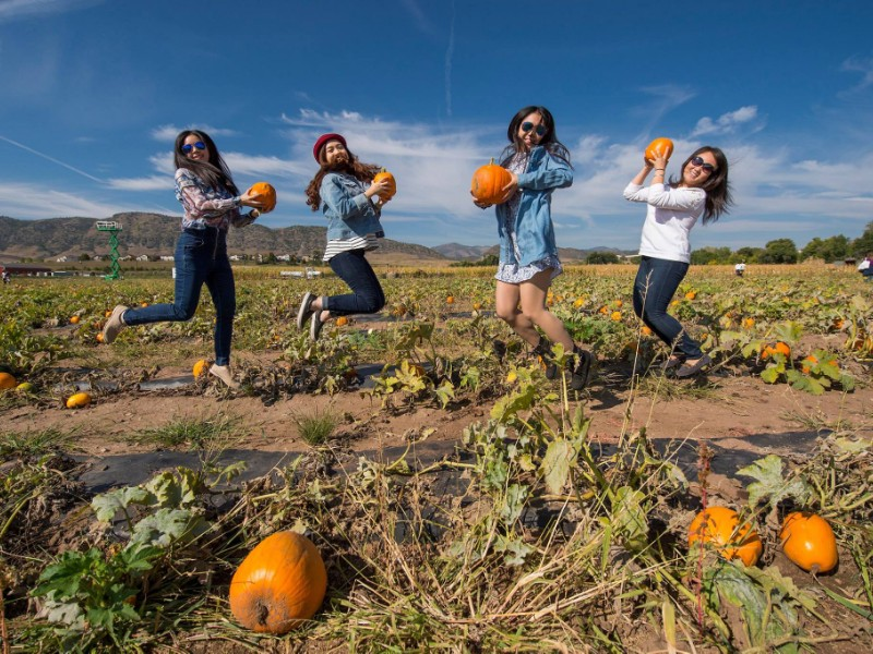 11 Colorado Pumpkin Patches To Visit This Fall Trips To Discover