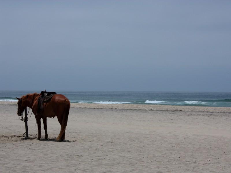 horse on the beach, Rosarito, Mexico