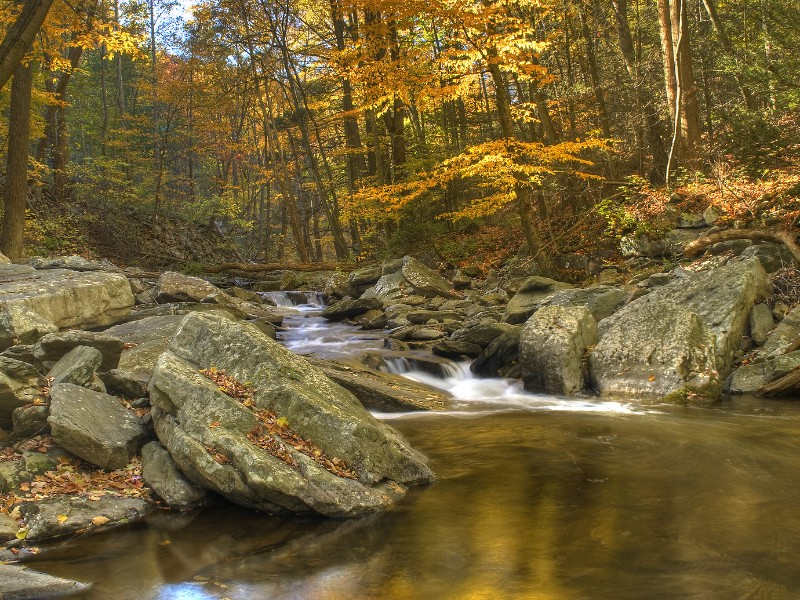 There are lots of trails for hiking and biking in the Catoctin Mountain State Park.