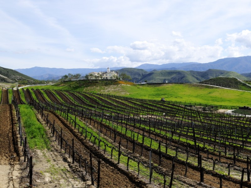 Temecula Valley vineyard, California