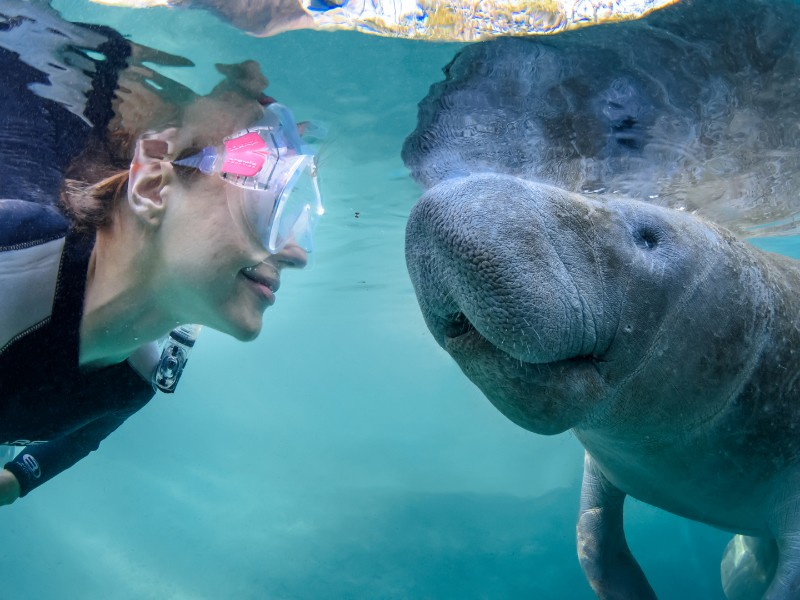 Get face to face with a manatee