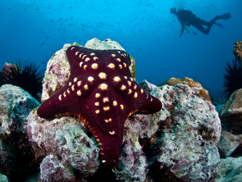 Diving off Cocos Island,  a rocky reef with a seastar.