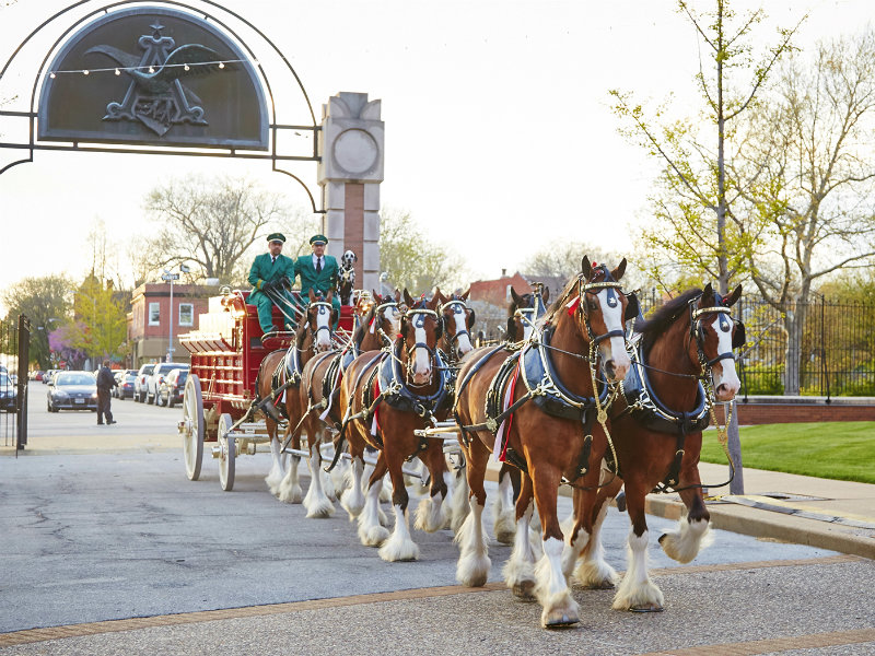 Parade of the Clydesdale Horses