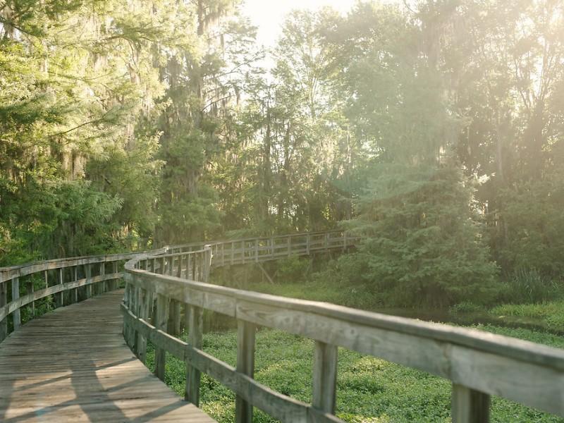 Phinizy Swamp bridge view