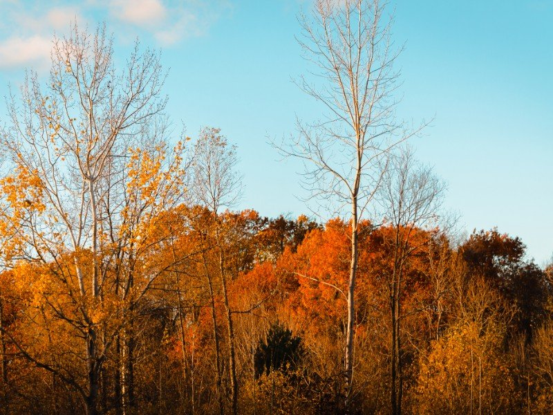 Landscape of Wahlfield Park near Grand Rapids