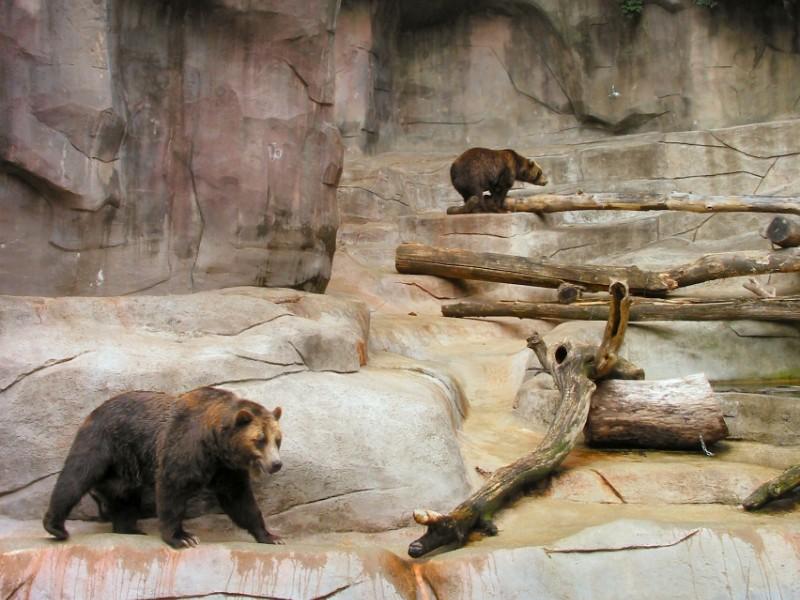 Bears at John Ball Park Zoo