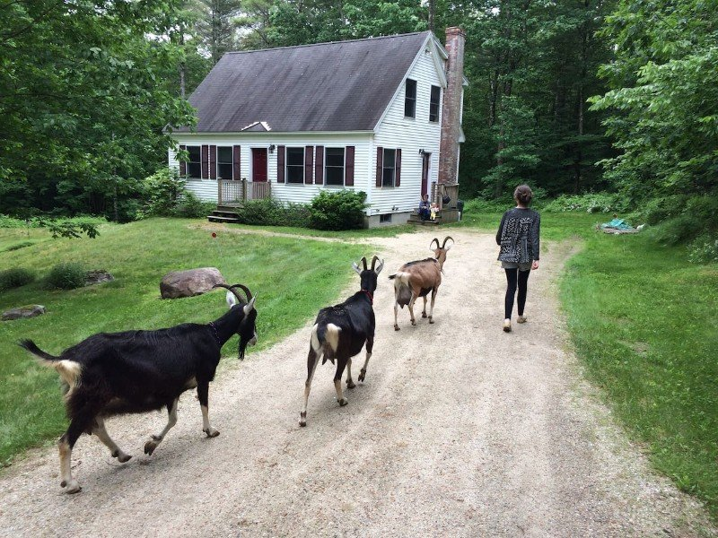 Great Goat Get-away in Southern Maine Airbnb