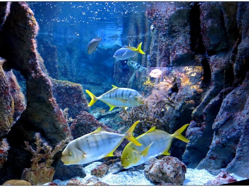 Gijon Aquarium, Asturias