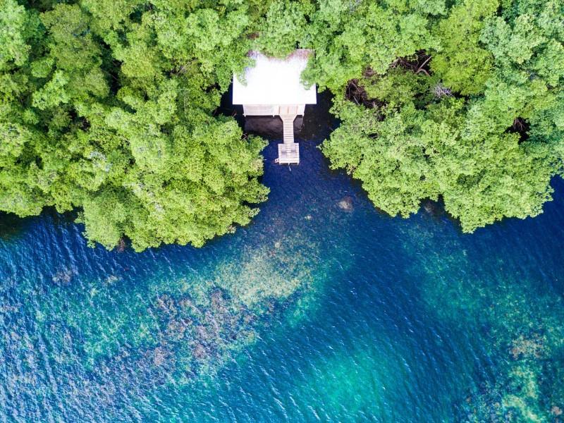 Jungle Retreat on Bioluminescent Lagoon