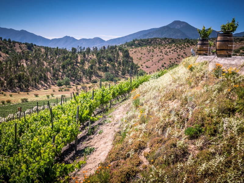 View from Indomita winery in Casablanca valley, Region de Valparaiso