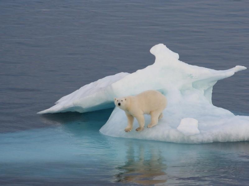 Polar bear on an iceberg off the Greenland coast