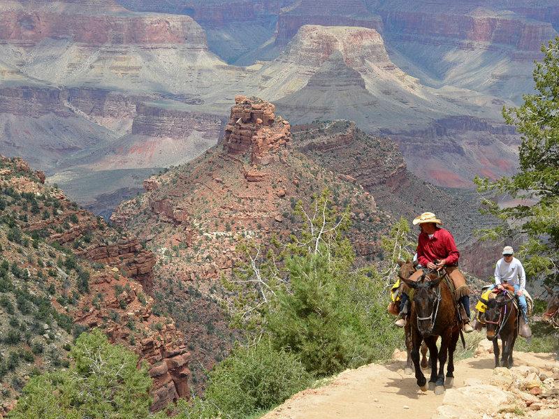 Mule rides
