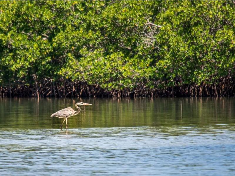 Pelican Island is America's first national wildlife refuge.