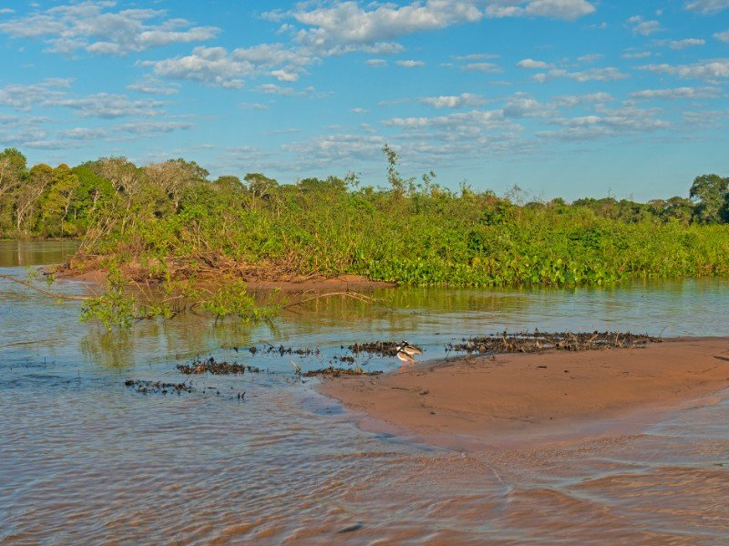 Pantanal Wetlands Panorama