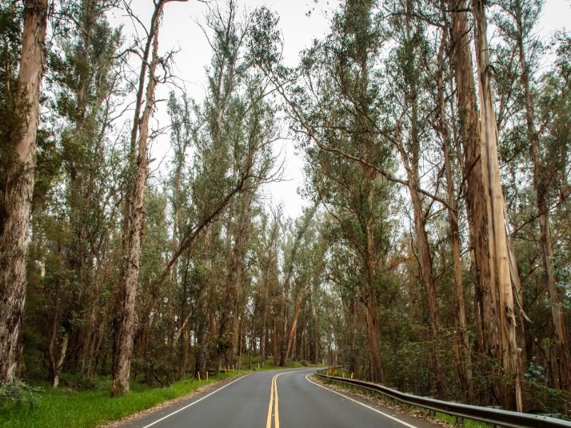 Upcounty Maui on the way to Haleakala National Park