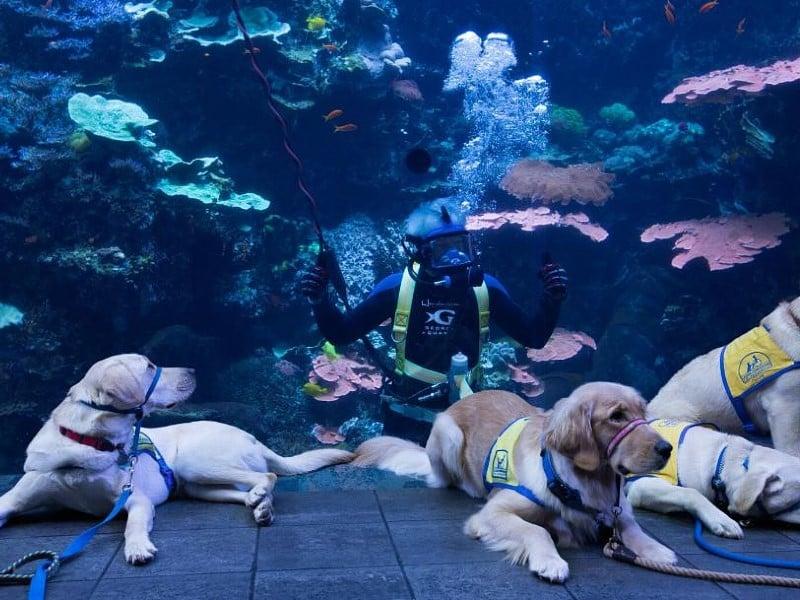puppies at the aquarium