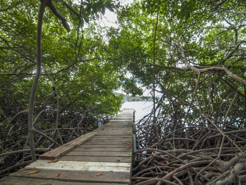Small wooden plank dock extends into tropical bay through shady mangrove forest in Ensenada Honda in Isla Culebra