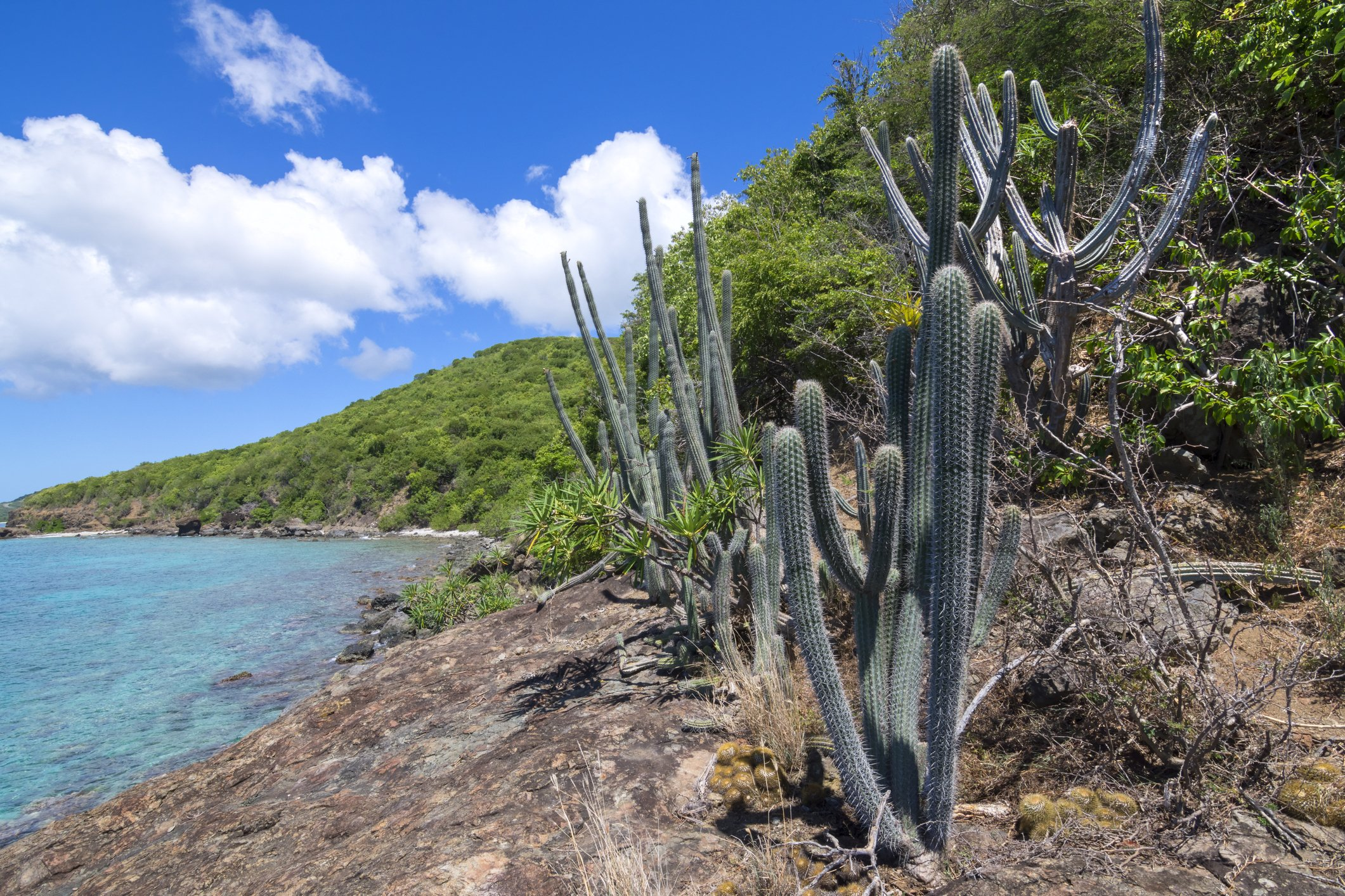 Naturally occurring variety of endemic cactus and other plants