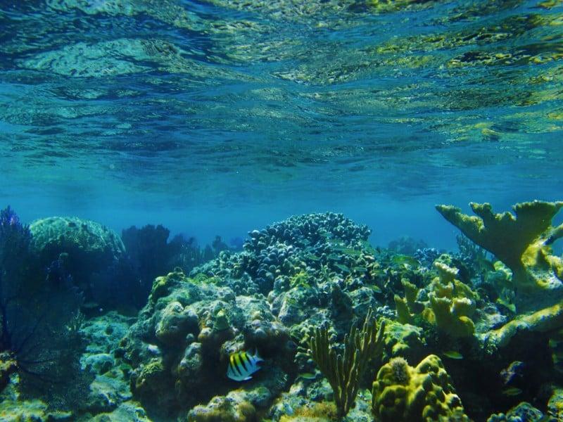Tropical underwater coral in Puerto Rico