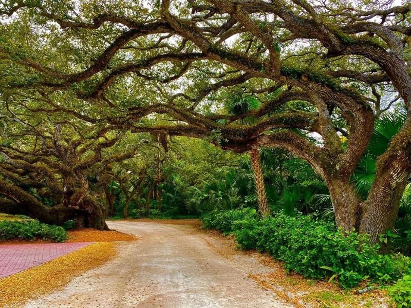 The Historic Jungle Trail