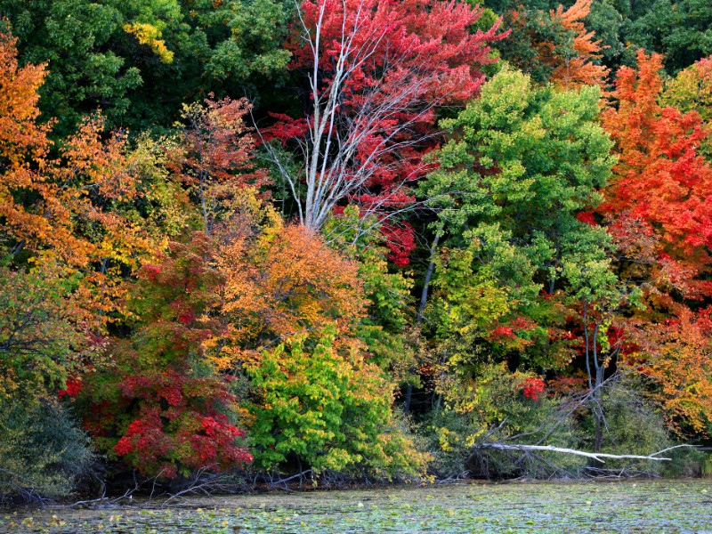 Colorful autumn trees in Maybury State Park
