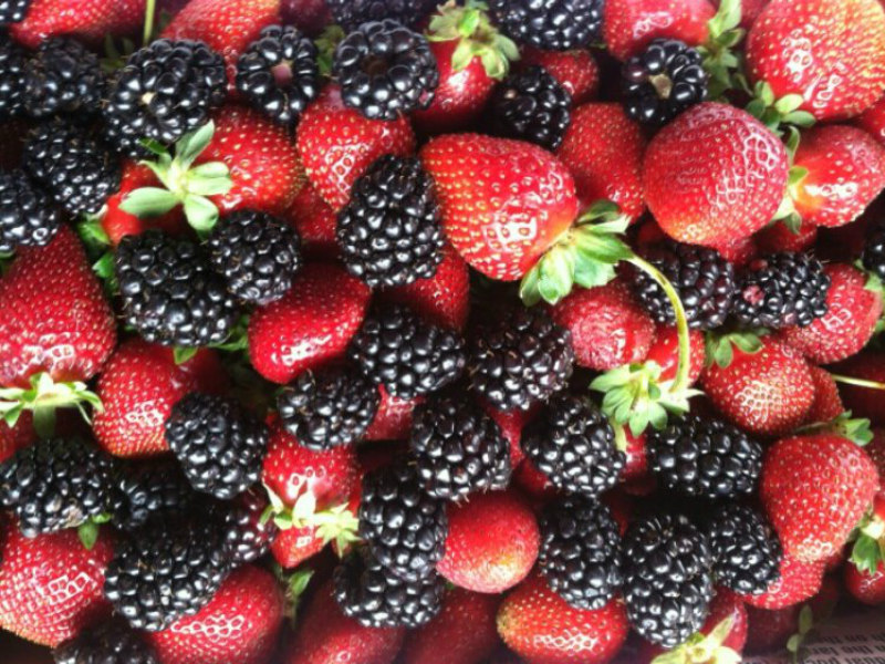 Fresh berries at Sweet Berry Farm in Marble Falls, TX