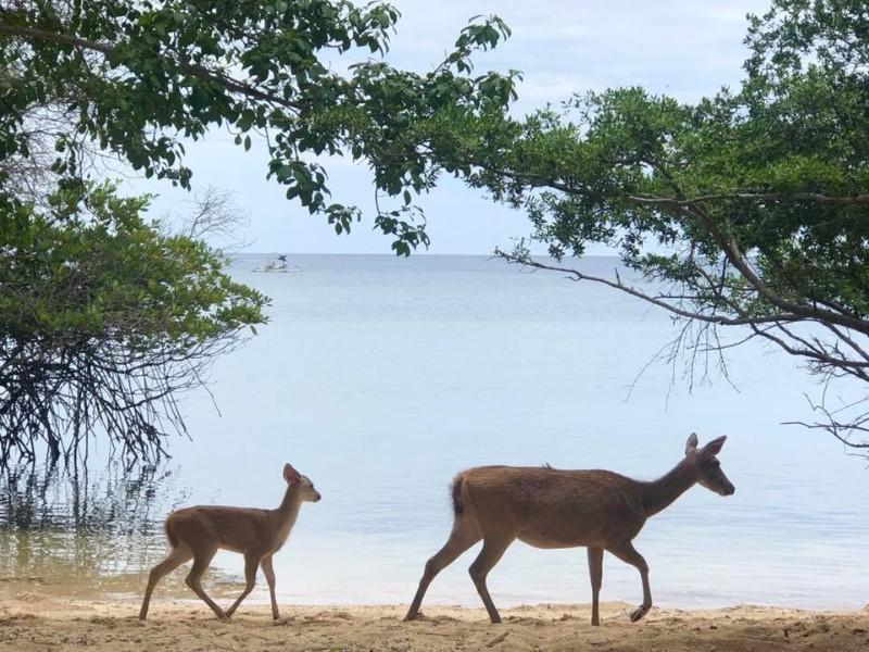 Deer in West Bali National Park
