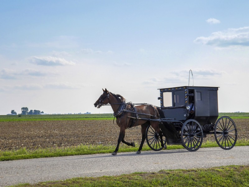 Amish horse and buggy in Arthur, Illinois.