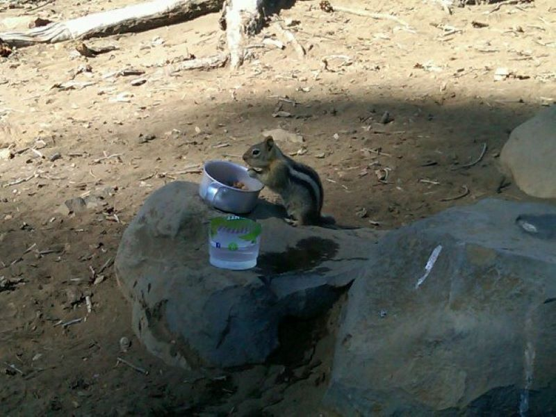 chipmunk at the campsite