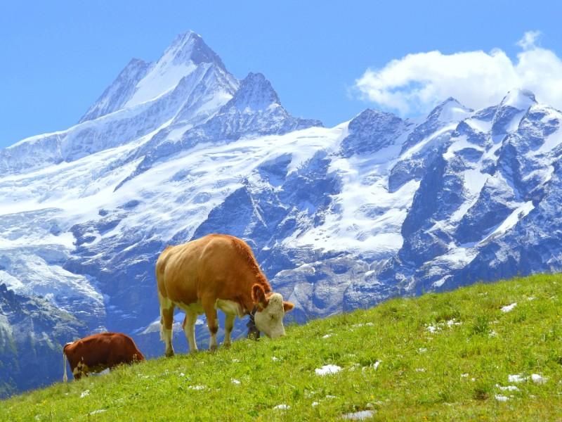 The Alps, Grindelwald, Switzerland