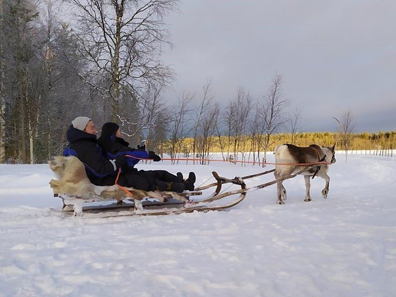 Visit an Authentic Reindeer Farm with Reindeer Safari