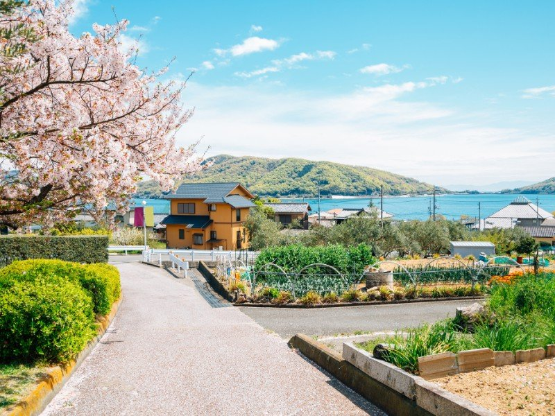 Cherry blossoms and seaside village at Shodoshima Olive park, Japan
