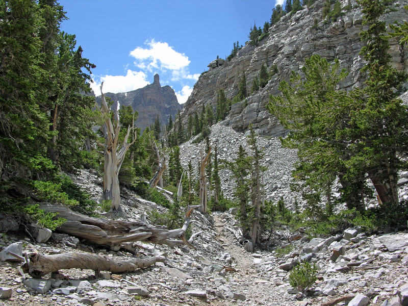 Landscape at Great Basin National Park