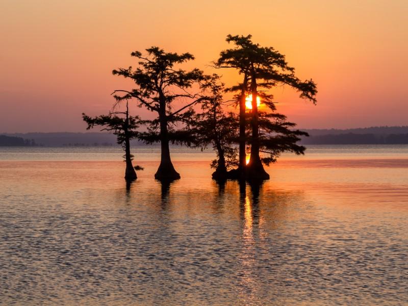 Bald Cypress trees, Reelfoot Lake