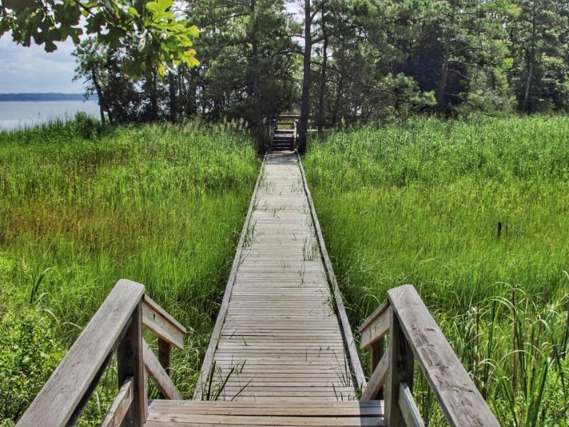 York River State Park fossil beach trail