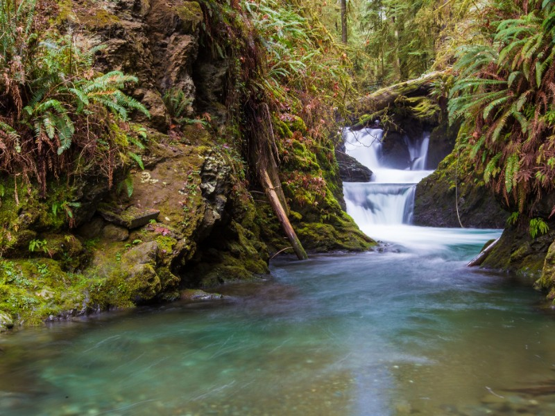 Quinault Rainforest, Olympic National Park, Washington
