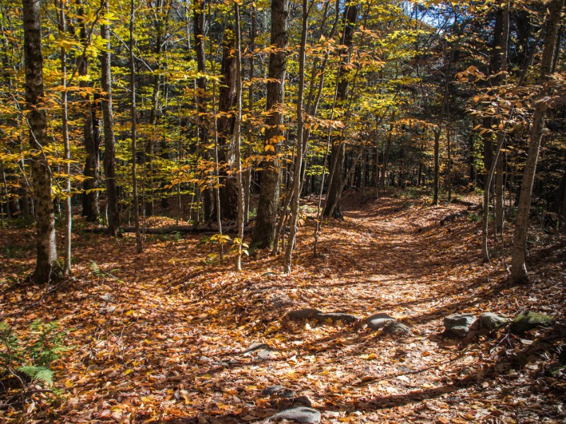 Mt. Mansfield state forest trail