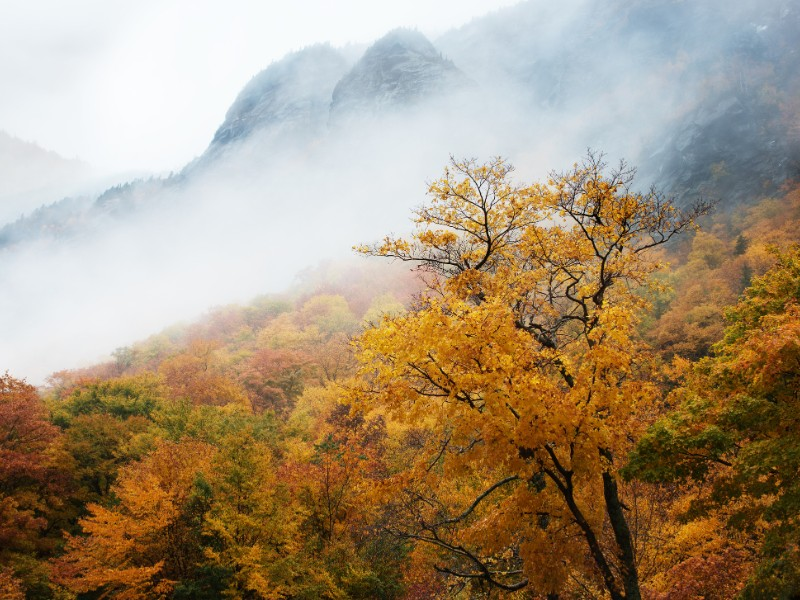 Trees and fog, Smugglers Notch in Autumn, near Stowe, Vermont
