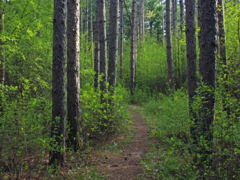 Spring forest in the Scuppernong Segment of the Ice Age Trail in Wisconsin