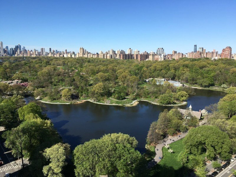 Central Park Nest, High Above The Trees