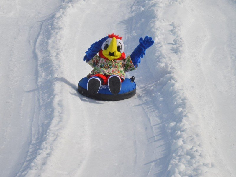 Parrot mascot on a snow tube